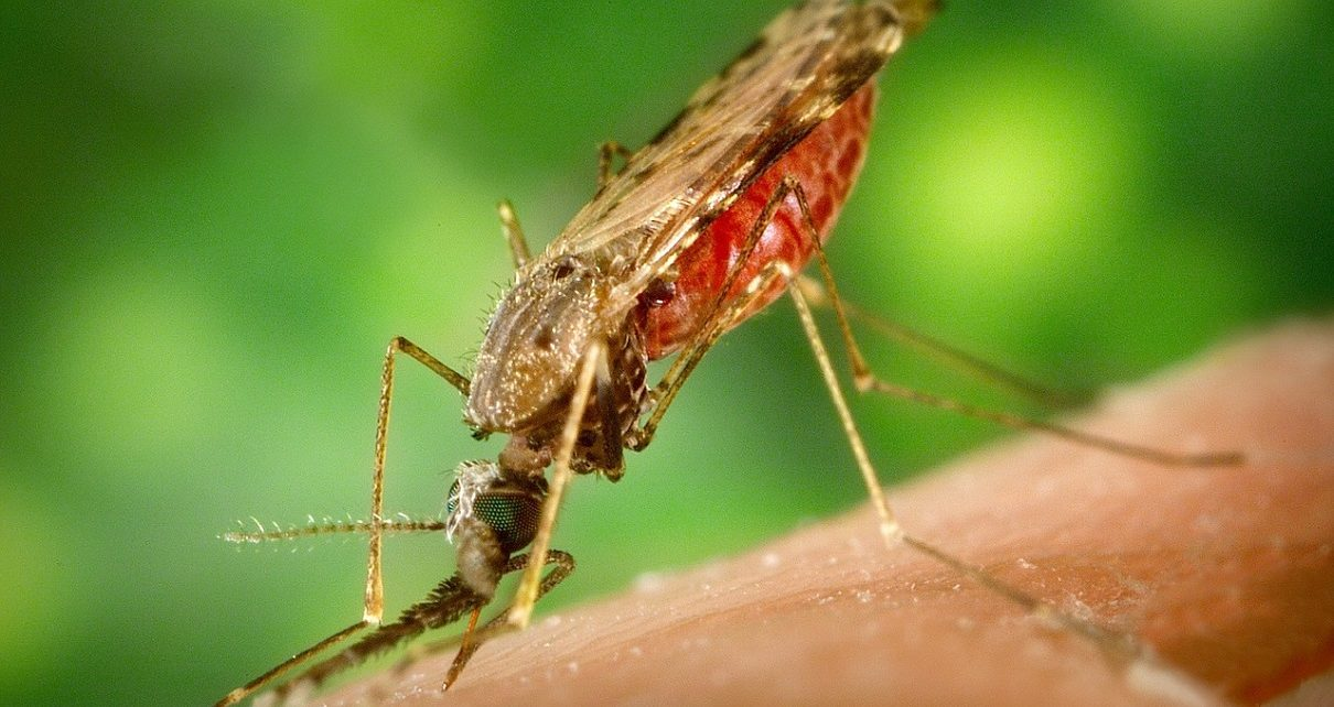 Africa Sets Ambitious Target To Combat Malaria In 2020