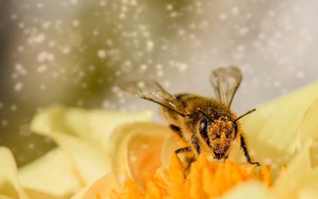 Bee-lieve it: B.C. celebrates the Day of the Honey Bee