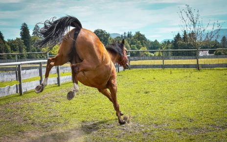 UK has a problem with runaway horses and bad owners