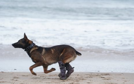 UK military dog Kuno to be the 72nd recipient of the PDSA Dickin Medal after tackling Al Qaeda insurgents