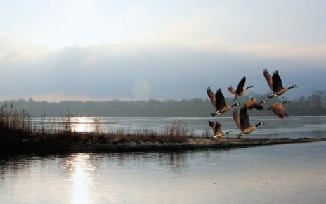 50,000 km2 in Seal River Manitoba to become Protected Indigenous land