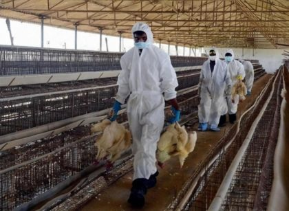 UK Confirms First Case of H5N8 Strain of The Avian Flu