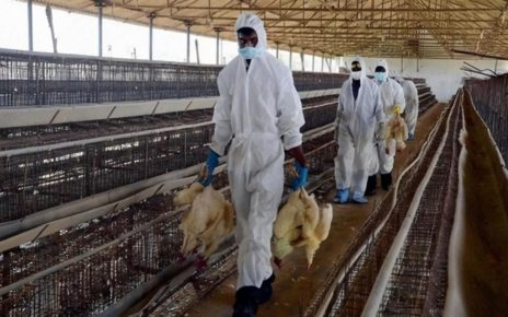 UK Puts New Measure In Place To Stop The Spread Of Bird Flu