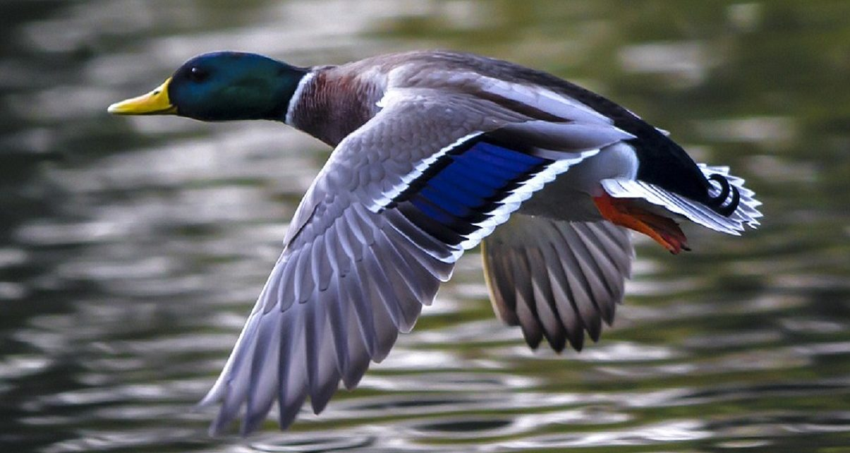 Ford Government Commits $30 Million To Protect Ontario Wetlands