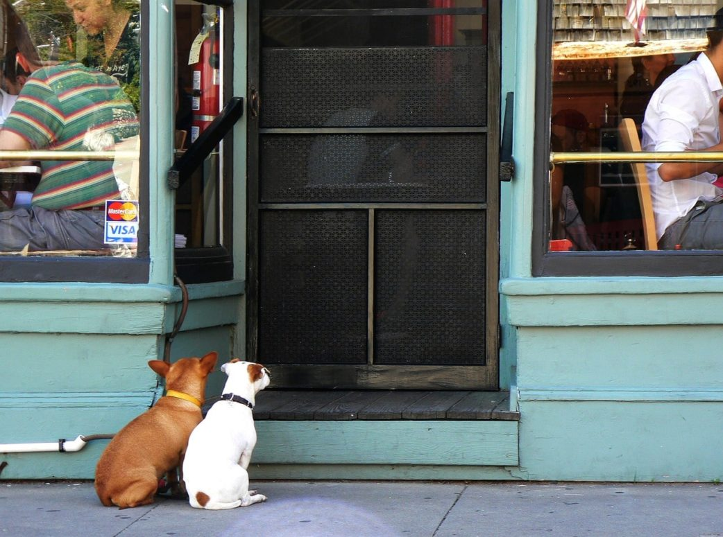 Dogs Now Allowed On Restaurant Patios, Sidewalk Cafes In This Province