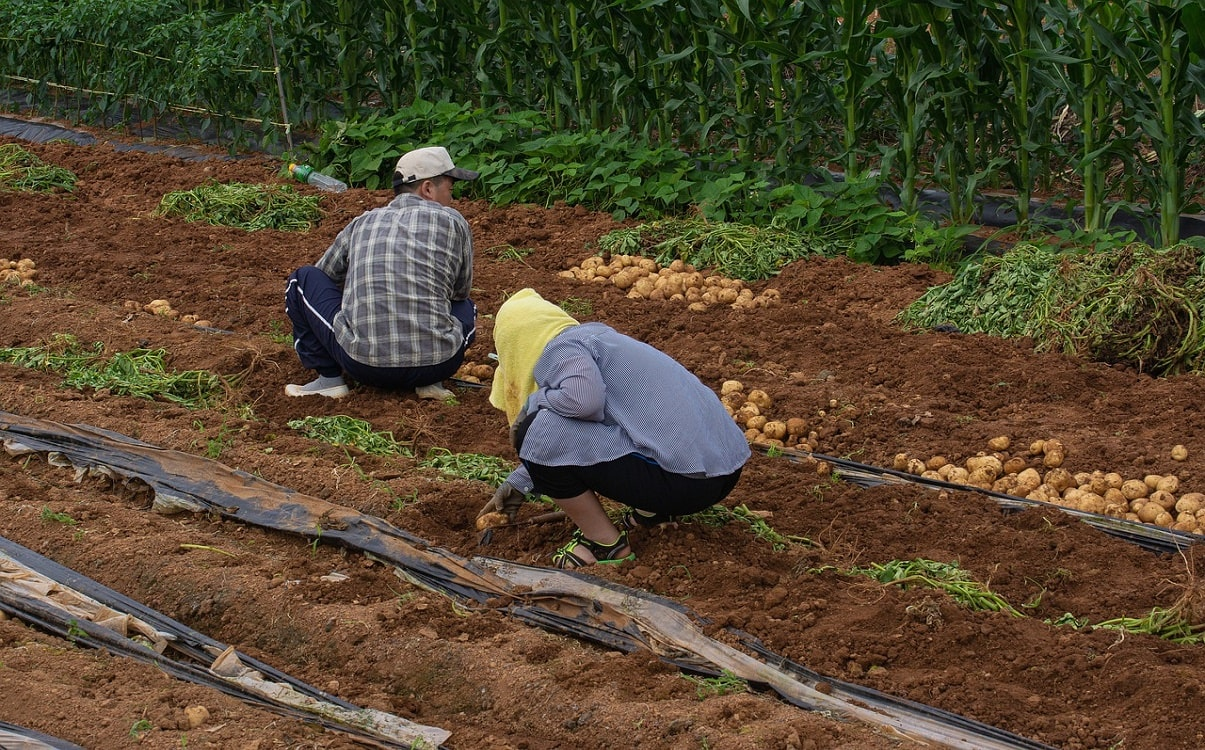 Temporary Foreign Workers (TFWS), Key To Canada's Food Security