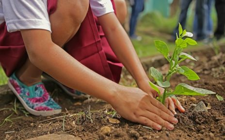 Canada Commits To Planting 2 Billion Trees By 2050