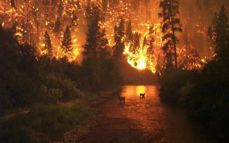 Wildfires Are A Result Of Climate Change & Global Warming